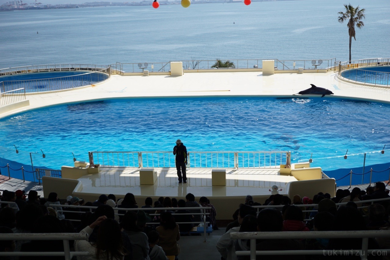イルカとアシカのショースペース